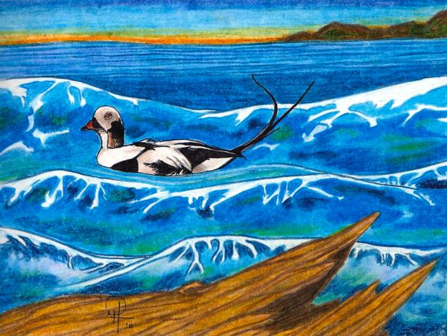 Ocean of the Long Tailed Duck by Doug Hiser