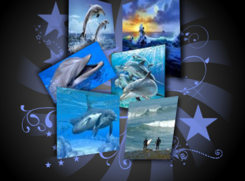 Dolphin_collage_by_teride2004