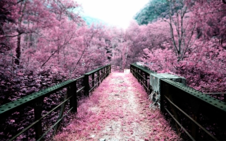 landscapes cherry blossoms flowers bridges pink flowers 2800x1750 wallpaper_wallpaperbeautiful_10