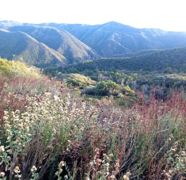 Los Padres National Forest     Photo Credit: S Wave